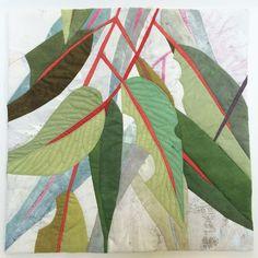 Image of Eucalyptus Excerpt 11