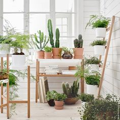 IKEA - SATSUMAS, Plant stand, bamboo, white, A plant stand makes it possible to decorate with plants everywhere in the home. You can decorate with plants in a visually interesting way with shelves at different levels. For indoor use. Bamboo Plants, Cool Plants, Green Plants, Hanging Plants, Indoor Plants, Indoor Gardening, Indoor Herbs, Indoor Greenhouse, Home Crafts
