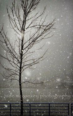 landscape photography winter snow nature photography home decor fine art photography holiday gift