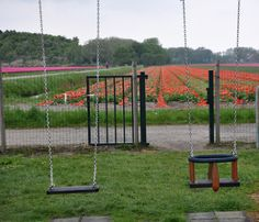 Tulips in Holland- The Traveling Runner's Blog
