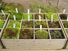 A display of different kinds of moss at Ginkakuji Temple in Japan. Ginkakuji, Moss Garden, Garden Ponds, Relaxing Places, Gifts For Photographers, Garden Seating, Flash Photography, Air Plants, Diy Flowers