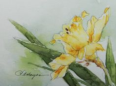 Daffodil Watercolor Painting Floral Original ACEO Flower
