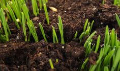 Grass seed – sowing, preparation and aftercare – Cope Seeds ...