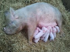 2 Days Old - I want one :)