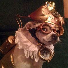 Princess Fleur, the Steampunk Chihuahua Steampunk Cosplay, Steampunk Shop, Art Steampunk, Steampunk Animals, Steampunk Accessoires, Steampunk Gadgets, Steampunk Wedding, Steampunk Clothing, Steampunk Fashion