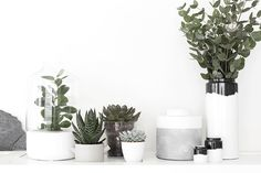 greenscape vignette inspiration in white or minimal vessels