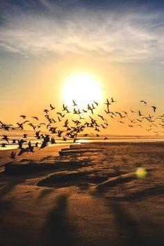 birds in flight at sunset on the beach