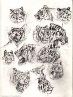 СКЕТЧБУК Tiger Sketch, Tiger Drawing, Cat Sketch, Tiger Art, Big Cats Art, Furry Art, Cat Art, Animal Sketches, Art Drawings Sketches