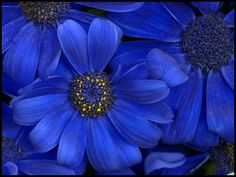 Blue by Talsi1, via Flickr
