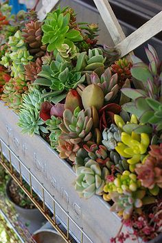 Succulents are a great option for a drier minimal soil growing spot and very drought hardy.