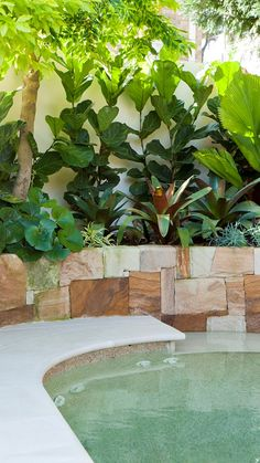Urban oasis: Family-friendly garden makeover A small Sydney backyard had to deliver a play area, plantings and an entertaining spot – and succeeds on all fronts - by Jane Parbury Tropical Backyard Landscaping, Tropical Garden Design, Landscaping Ideas, Backyard Pools, Garden Makeover, Backyard Makeover, Pool Plants, Indoor Plants, Garden Ideas Australia