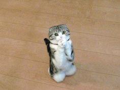Funny Cute Cats  I want IT! @:42 it's SOOOOO CUTE!