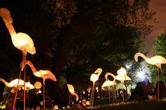 Lantern Flamingo, By Jitaek Park