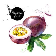 Illustration of Hand drawn watercolor painting on white background. Vector illustration of passion fruit vector art, clipart and stock vectors. L'art Du Fruit, Fruit Box, New Fruit, Fruit And Veg, Fruit Water, Watercolor Fruit, Fruit Painting, Watercolor Paintings Abstract, Watercolor Images