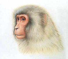 ニホンザル-thumb.jpg (349×303)