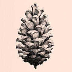 Nature 1:1 Pine Cone