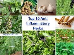 Top 10 Anti-Inflammatory Herbs Tumeric, Ginger, Garlic, Rosemary, Licorice…
