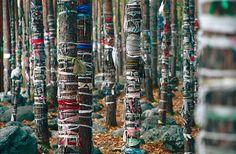 Sacred Forest Near Arshan Village | Sacred forest near Arsha… | Flickr
