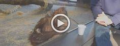 Este orangután tiene la reacción más divertida después de ver un truco de magia #viral