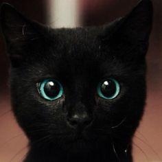 すてきな瞳