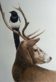 Alan Woollett Stag and Magpie drawing
