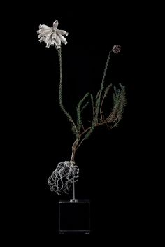 Nic Bladen / Erica Cerinthoides (common name Fire Heath or Rooihartjie) / sterling silver & bronze / 35cm