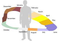 Synaesthesia timeline. Can you see time?  time-space synesthesia