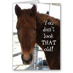 Funny Birthday Compliment TWH Horse Western Greeting Card