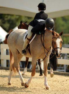 Pyromaniac (Maniac) Lesson Pony: Size- small pony. Intermediate/Beginner jumping