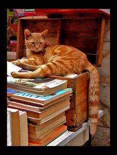 """Intellectual cat -3,"" by ~vastavnic on deviantART"