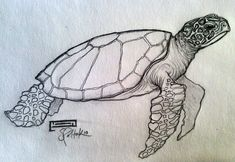 Turtle Sketch | Home | sea turtle drawing Gallery | Also Try: