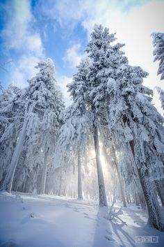 Snow - Icy Rays - by marcokaus Winter Szenen, Winter Magic, Winter Season, Winter Holidays, Winter Trees, Winter Pictures, Nature Pictures, Winter Photography, Wildlife Photography