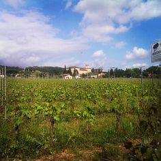 Florence, Italy vineyards