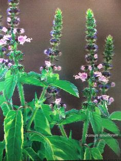 True Stress Relief With Herbal Medicine