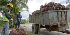 Fermiamo la pubblicità ingannevole all'olio di palma
