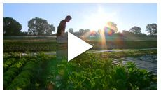 World Wide Opportunities on Organic Farms - WWOOF