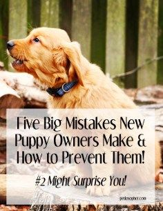Five Big Mistakes New Puppy Owners Make