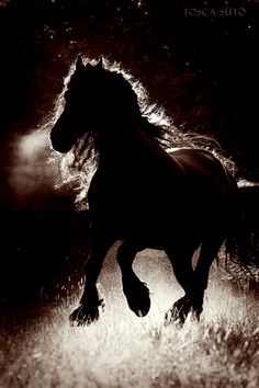 """♂ Horse running """"The friesian Siebe"""" by ~vadalein"""