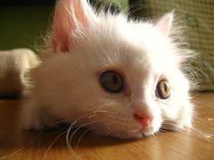 Top 16 Amazing Cat Pictures
