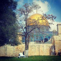 Beautiful- Palestine