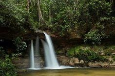 Grupo Ecológico Sentinela dos Pampas: ONU: metade das espécies florestais corre risco, e...