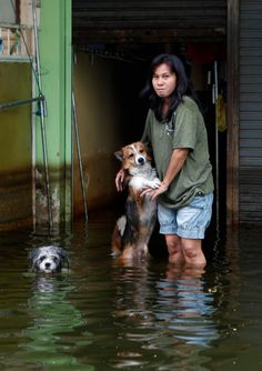 A flood-affected resident stands with her dogs at her flooded house in Thailand.