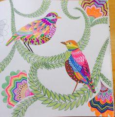 Millie Marottas Tropical Wonderland A Colouring Book Adventure Adult ColoringColoring BooksLittle BirdsCute ArtCurious Creatures