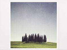 Classic Tuscany Wall Art  Enchanted Forest by GreenGooseGallery, €26.00