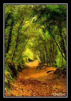 handa: El bosque encantado