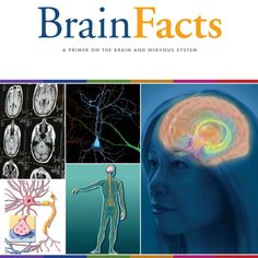 Produced by the Society for Neuroscience, Brain Facts is a 95-page primer on the brain and nervous system, the latest edition of which includes information on brain development, learning and memory, language and psychiatric illnesse.  You can download this excellent resource for free via the following link.  http://www.brainfacts.org/~/media/Brainfacts/Article%20Multimedia/About%20Neuroscience/Brain%20Facts%20book.ashx  #Neuroscience #BrainFacts #NervousSystem