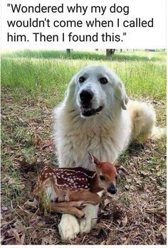 10 Smiling Animals to Brighten Your Day Make your day instantly better by checking out these adorable smiling animals! Funny Animal Jokes, Cute Funny Animals, Funny Dogs, Funny Looking Animals, Funny Dog Memes, Cute Dogs And Puppies, Doggies, Cute Little Animals, Baby Animals Super Cute