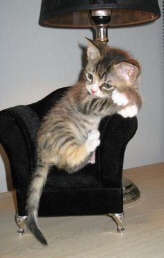 Ohhhhh I want a little chair for our kitten!