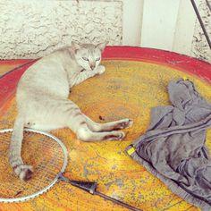 Batminton cat
