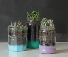Materials: Glass jars Enamel paint (I used Plasti-kote's Fast Dry Enamel Brush On in Jade, Sky Blue and Lavender) Sponge (I used a kitchen sponge) Small pebbles Potting soil Mini succulents Directi...